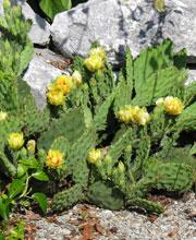 Plante Pour Terrain En Pente les bonnes plantes pour terrain en pente | une fleur au jardin